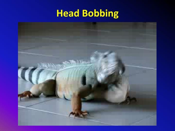 Head Bobbing