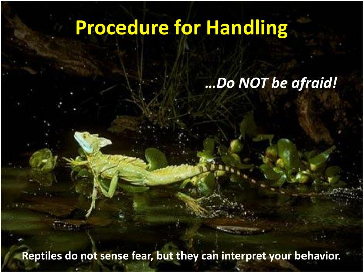 Procedure for Handling