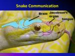 snake communication1