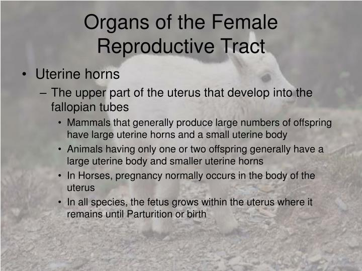 Organs of the Female Reproductive Tract