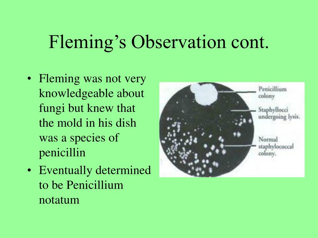 Fleming was not very knowledgeable about fungi but knew that the mold in his dish was a species of penicillin