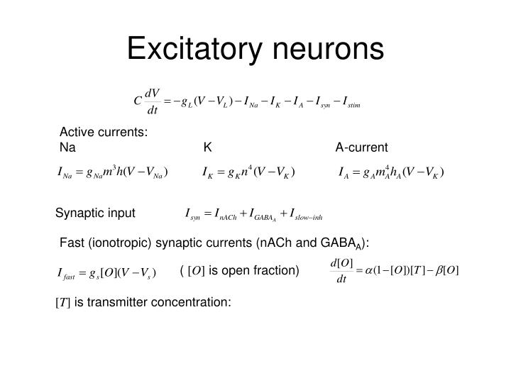 Excitatory neurons