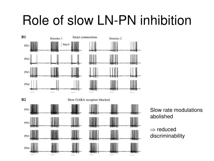 Role of slow LN-PN inhibition