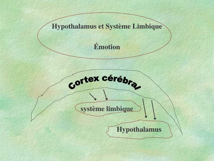Hypothalamus et Système Limbique