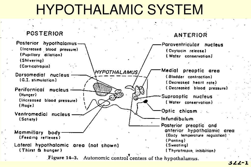 HYPOTHALAMIC SYSTEM