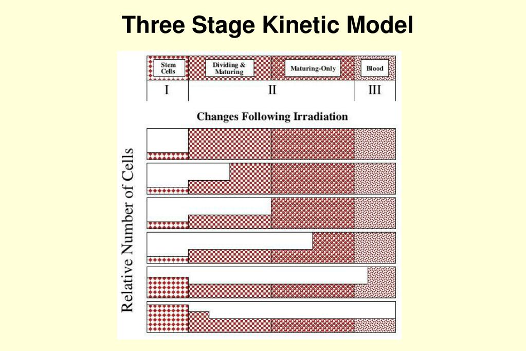 Three Stage Kinetic Model