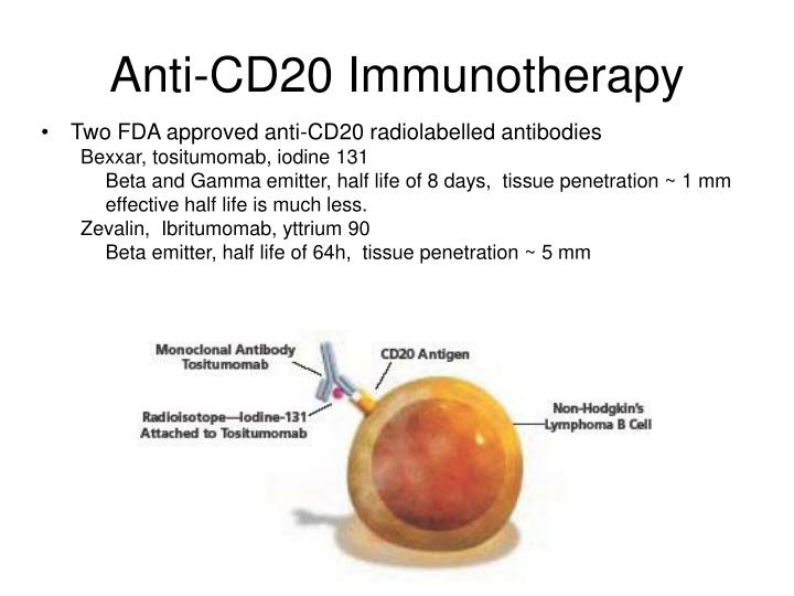 Anti-CD20 Immunotherapy