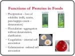 functions of proteins in foods