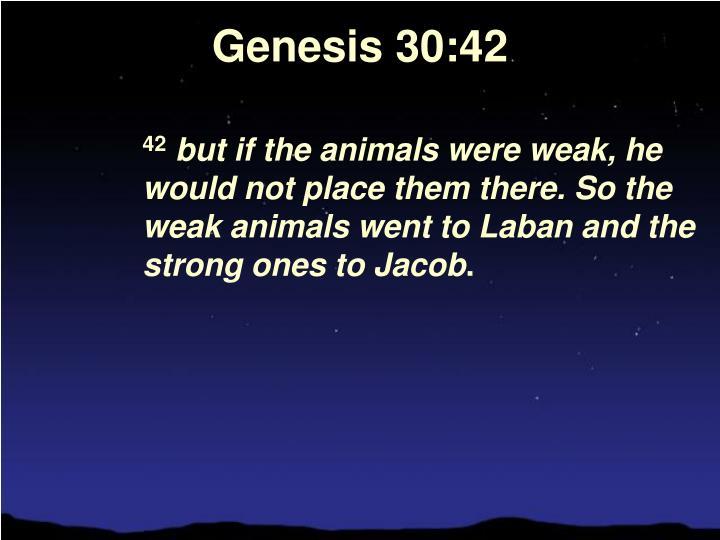 Genesis 30:42