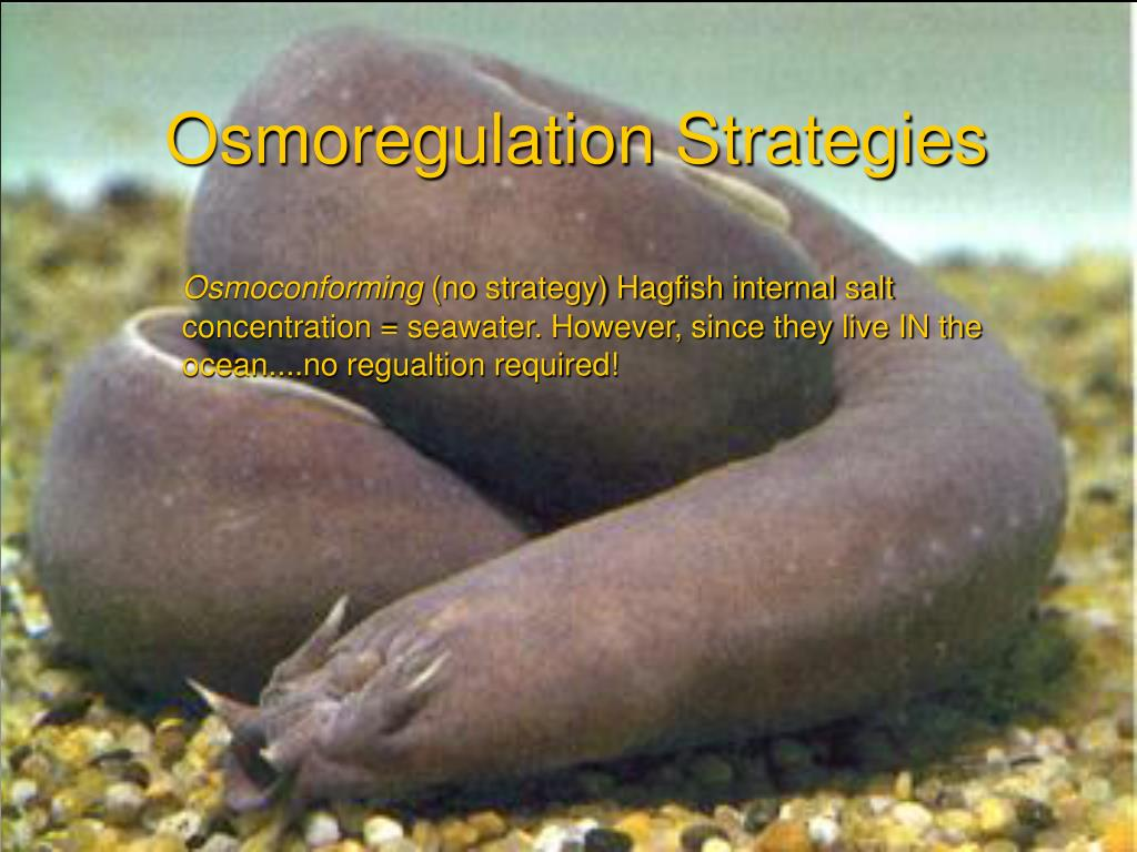 Osmoregulation Strategies