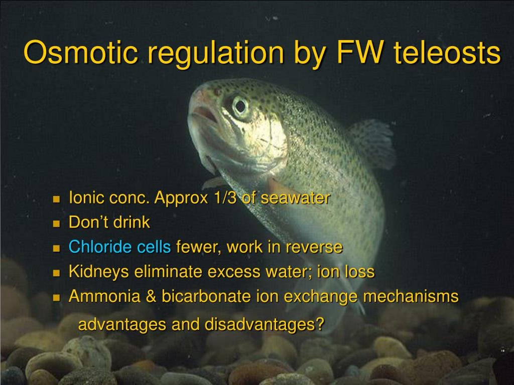 Osmotic regulation by FW teleosts