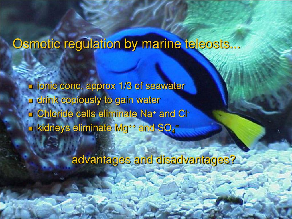 Osmotic regulation by marine teleosts...