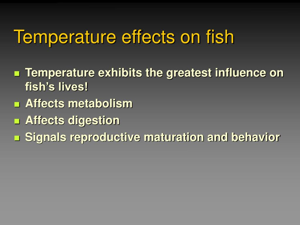 Temperature effects on fish