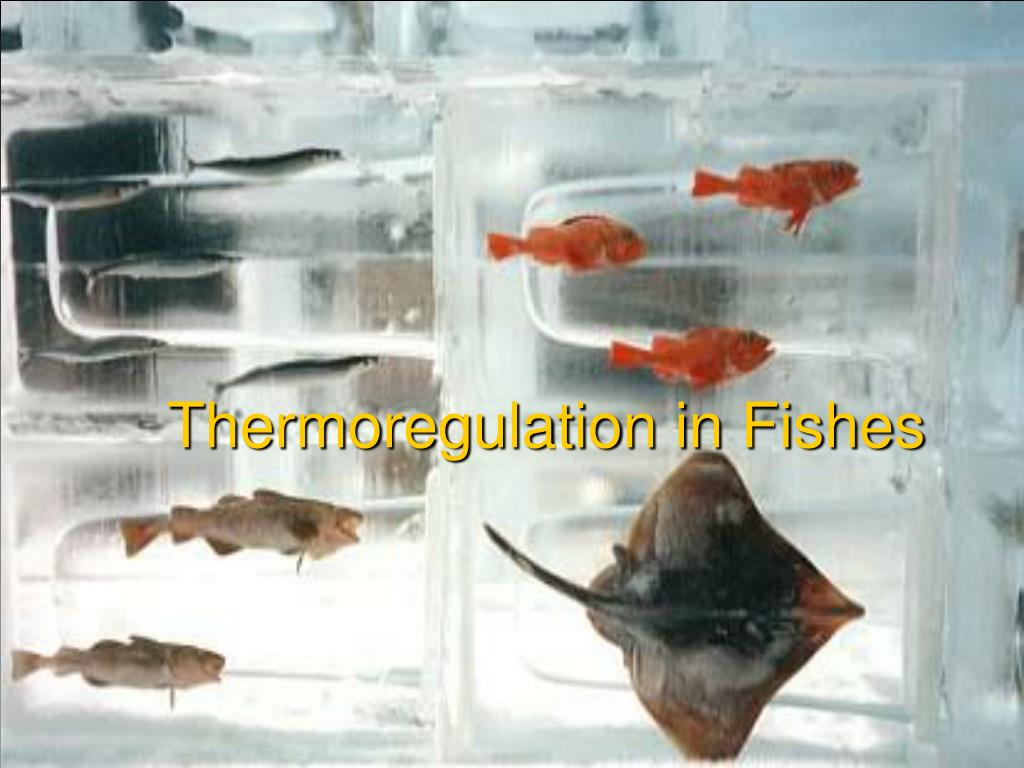 Thermoregulation in Fishes