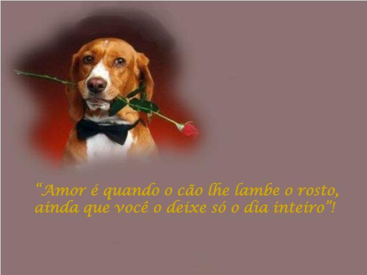 """""""Amor é quando o cão lhe lambe o rosto, ainda que você o deixe só o dia inteiro""""!"""