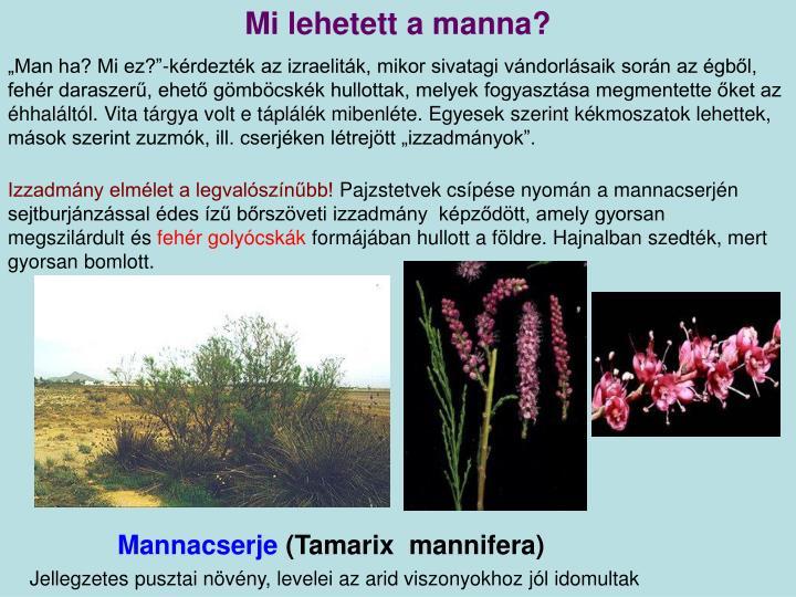 Mi lehetett a manna?