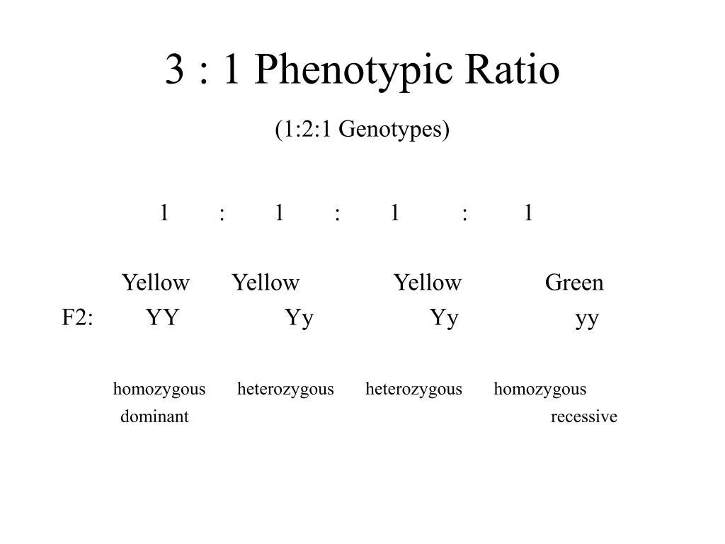 3 : 1 Phenotypic Ratio