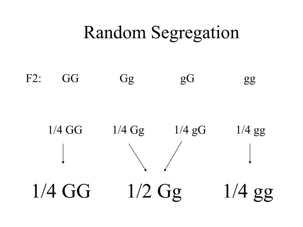 Random Segregation