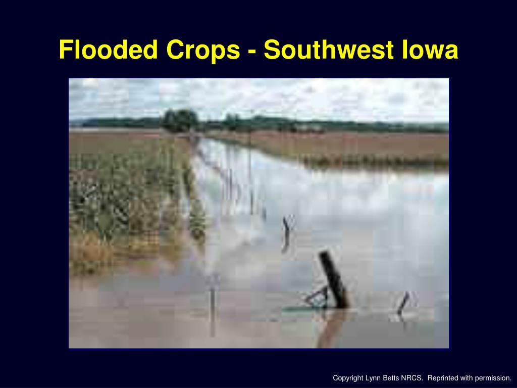 Flooded Crops - Southwest Iowa
