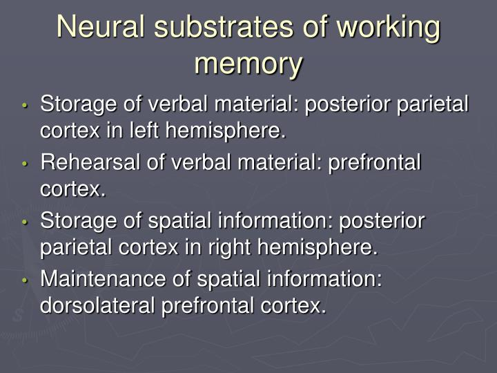 Neural substrates of working  memory