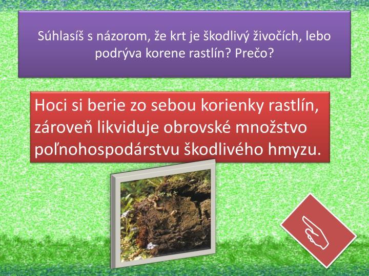 Súhlasíš s názorom, že krt je škodlivý živočích, lebo podrýva korene rastlín? Prečo?