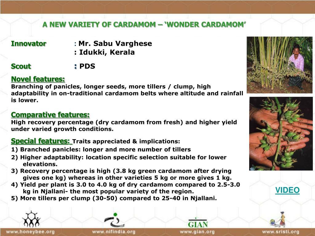 A NEW VARIETY OF CARDAMOM – 'WONDER CARDAMOM'
