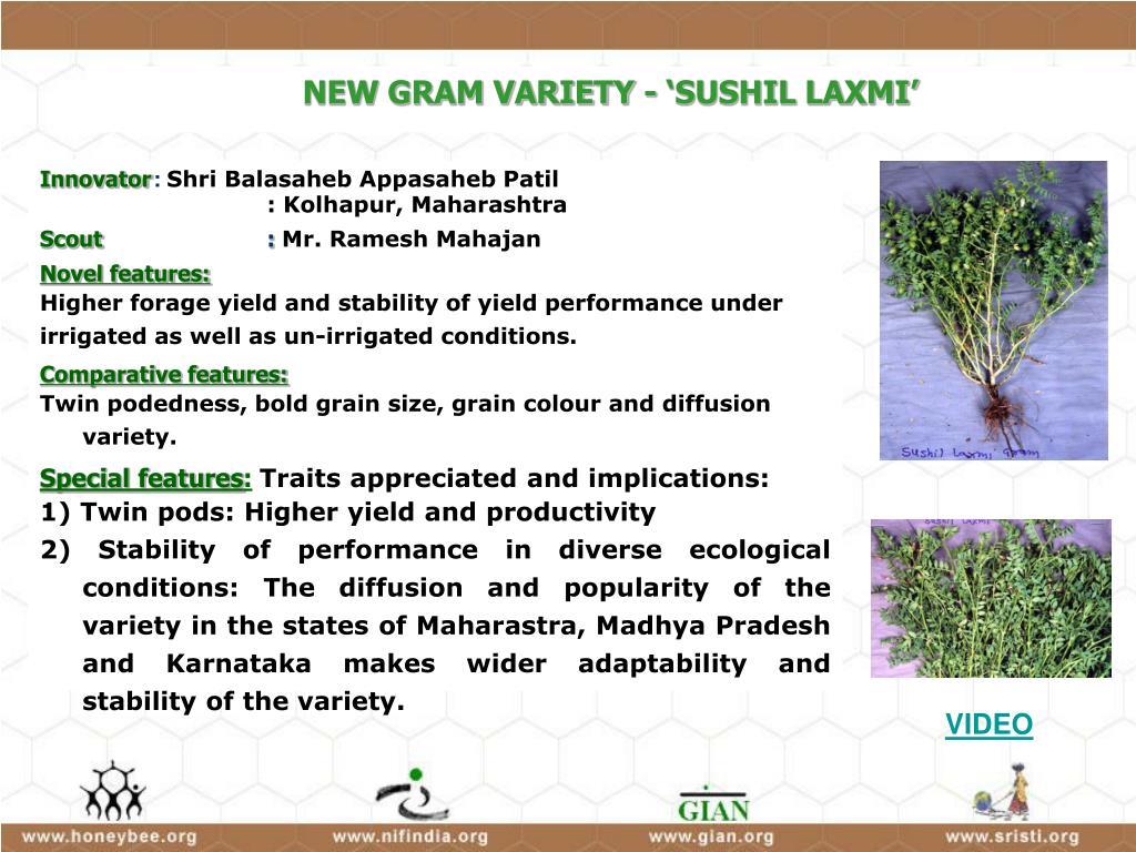 NEW GRAM VARIETY - 'SUSHIL LAXMI'