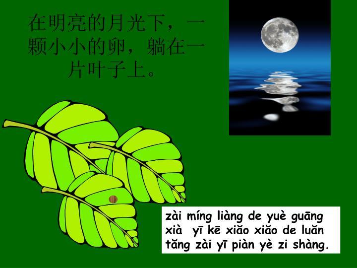在明亮的月光下,一颗小小的卵,躺在一片叶子上。