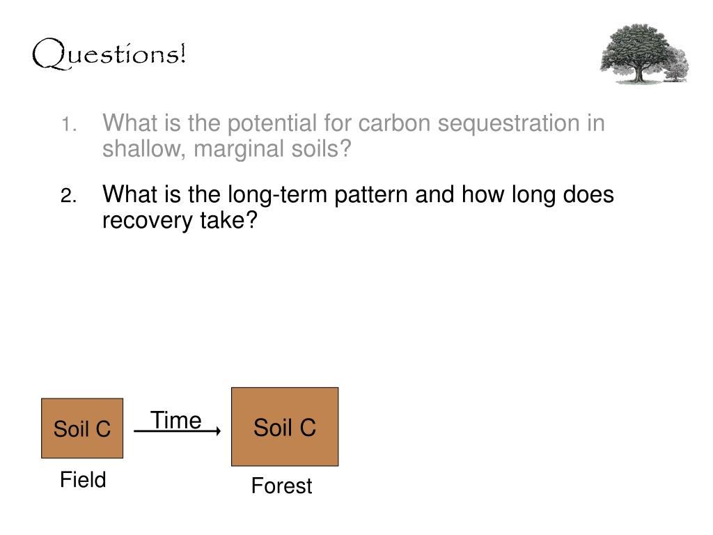 Soil C