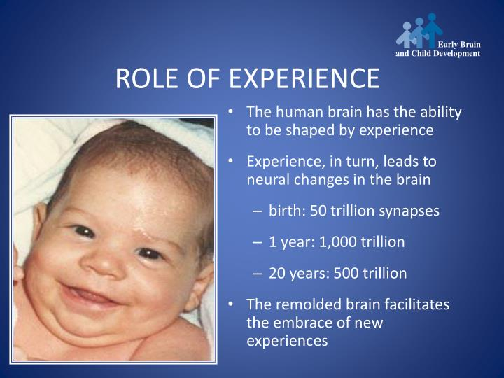 The human brain has the ability to be shaped by experience