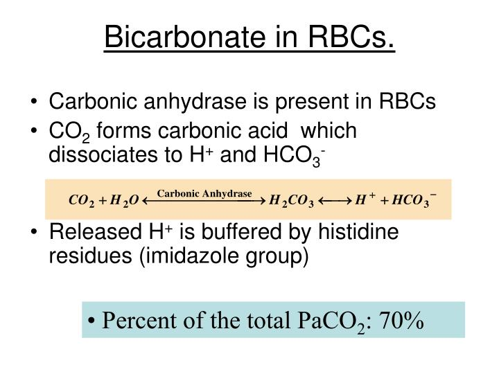 Bicarbonate in RBCs.