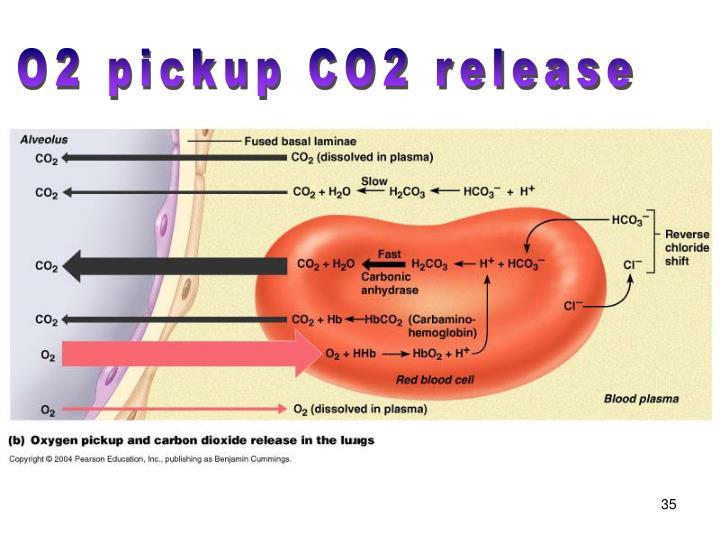 O2 pickup CO2 release