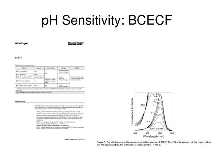 pH Sensitivity: BCECF