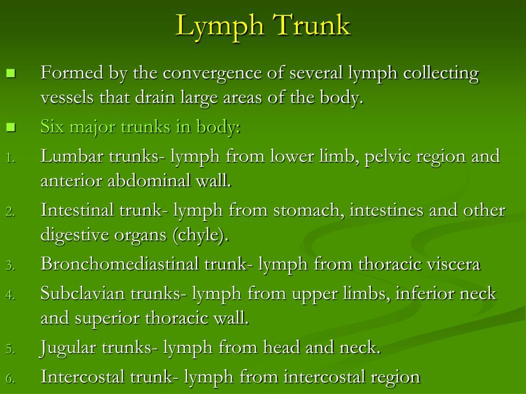 Lymph Trunk