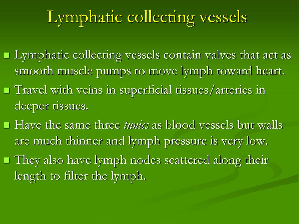 Lymphatic collecting vessels