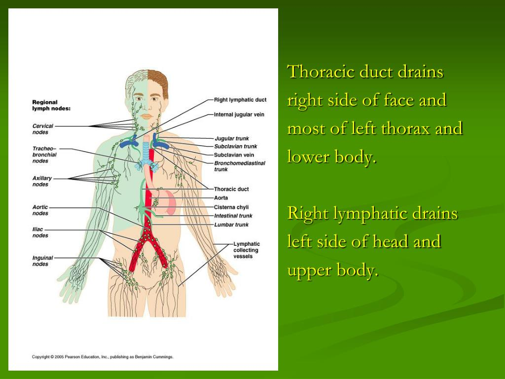 Thoracic duct drains