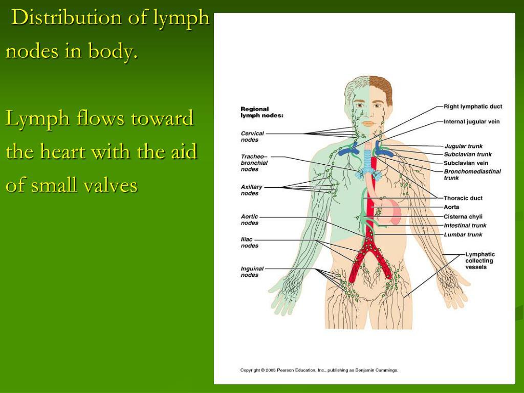 Distribution of lymph