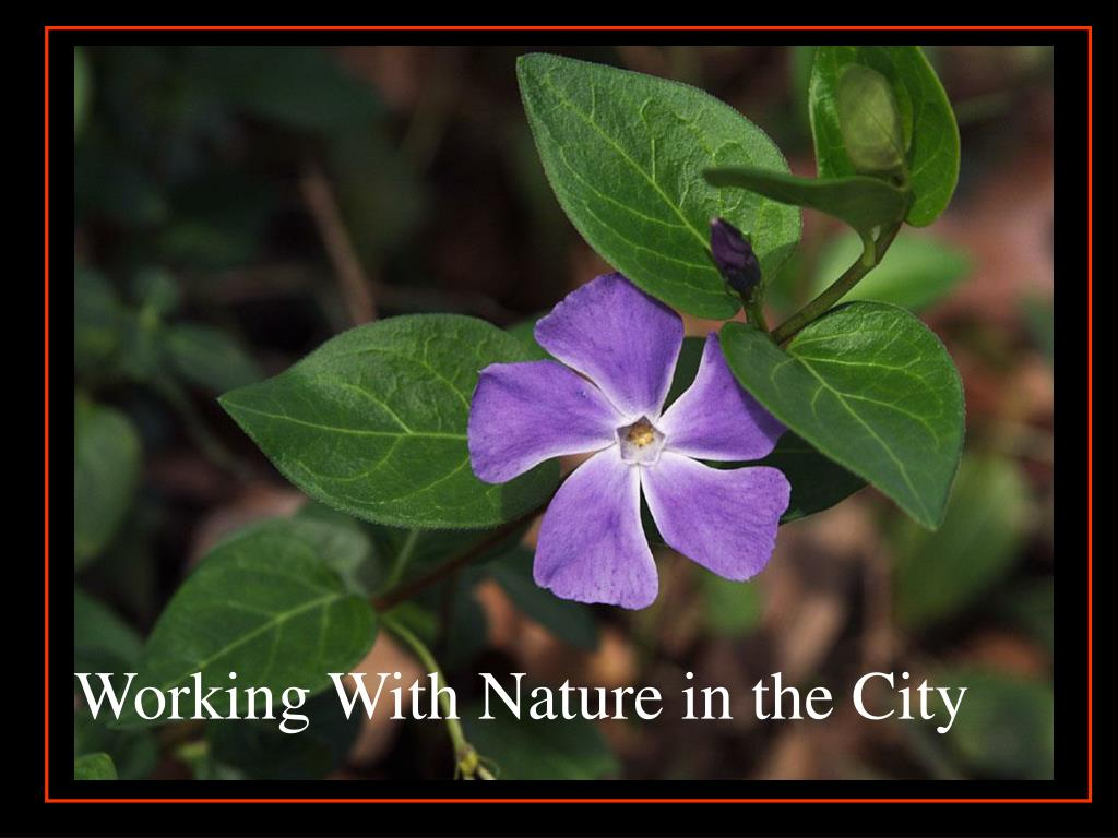 Working With Nature in the City
