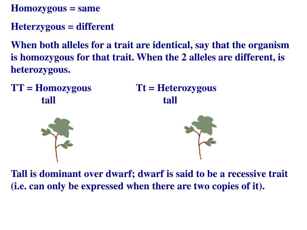 Homozygous = same