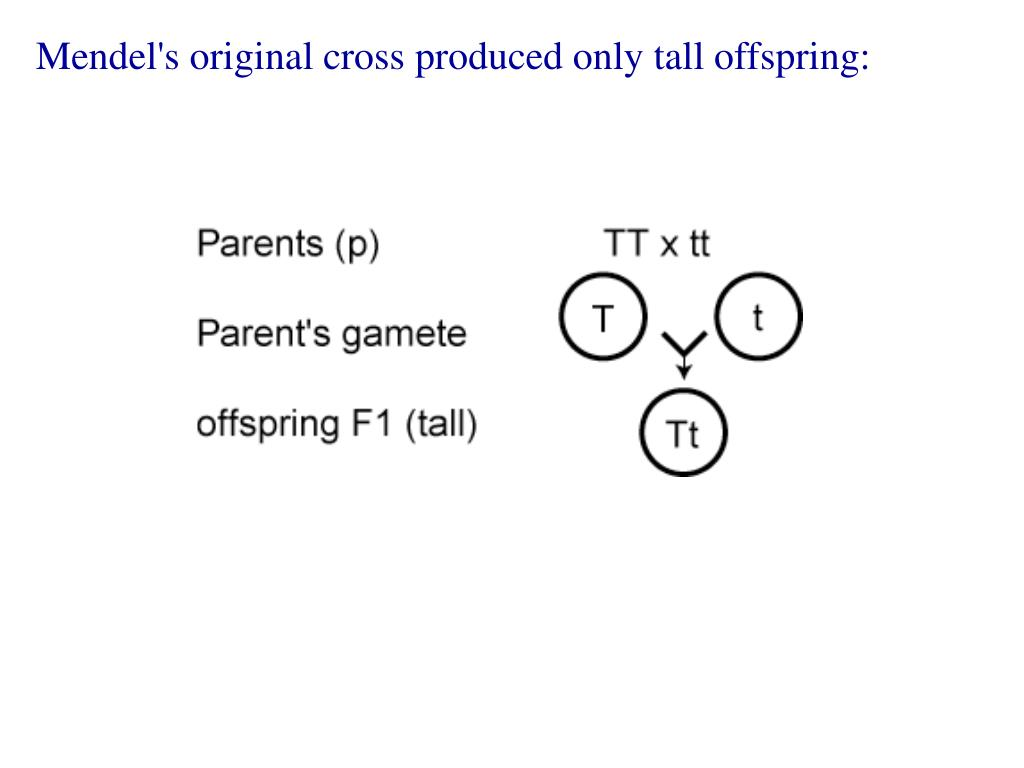 Mendel's original cross produced only tall offspring: