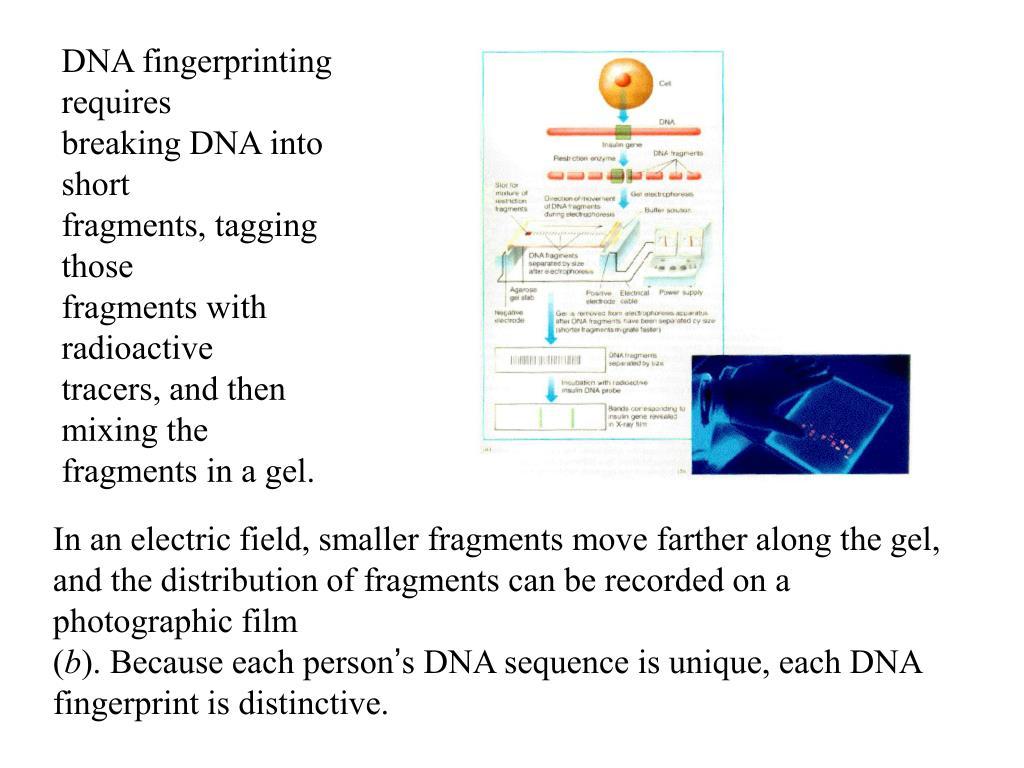 DNA fingerprinting requires