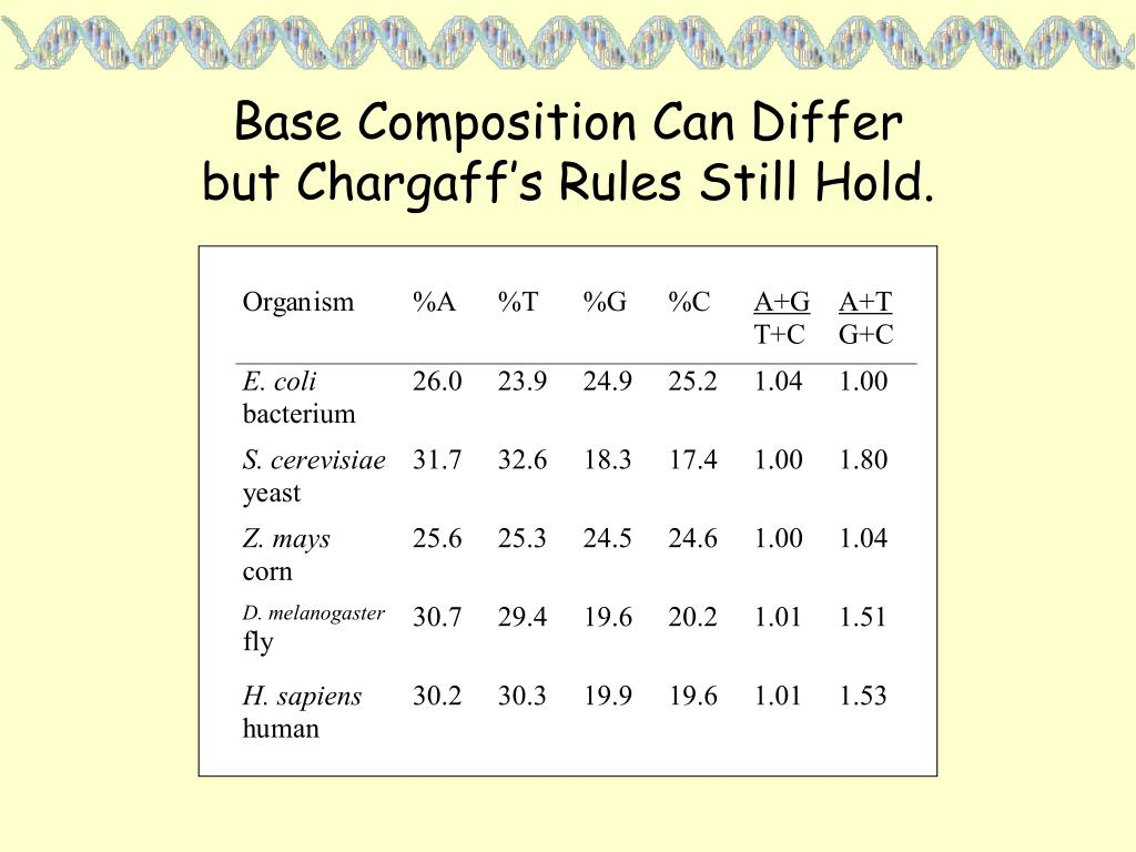 Base Composition Can Differ