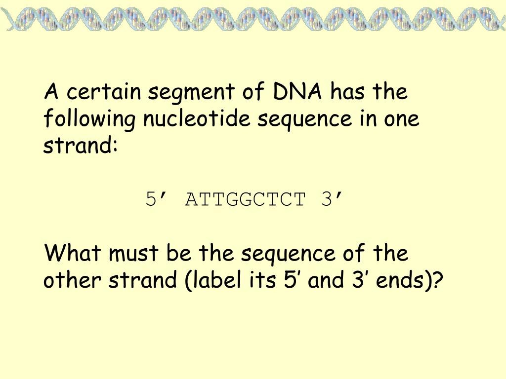 A certain segment of DNA has the following nucleotide sequence in one strand: