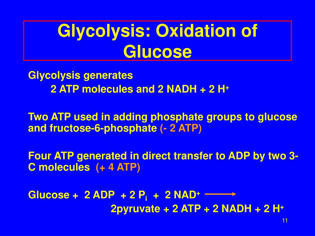 Glycolysis: Oxidation of Glucose