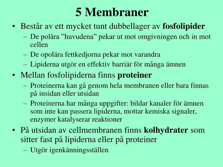 5 Membraner