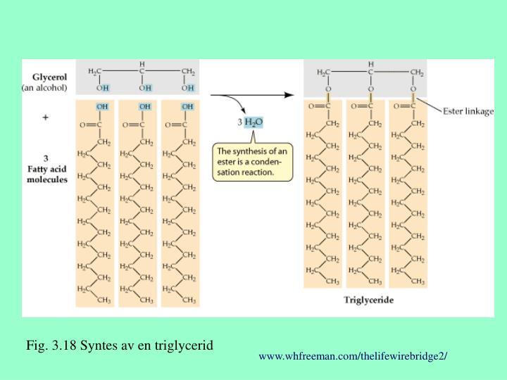 Fig. 3.18 Syntes av en triglycerid