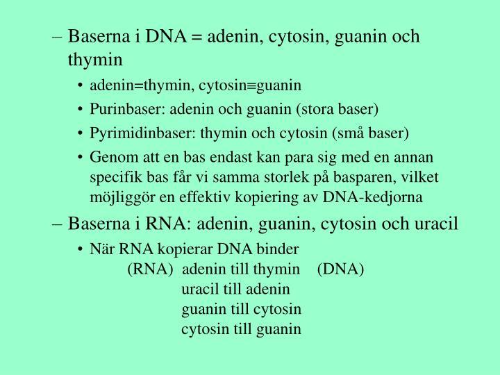 Baserna i DNA = adenin, cytosin, guanin och thymin