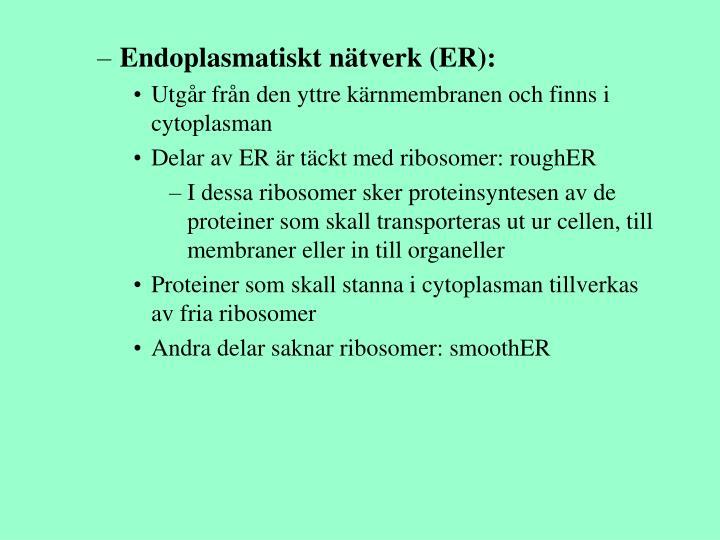 Endoplasmatiskt nätverk (ER):