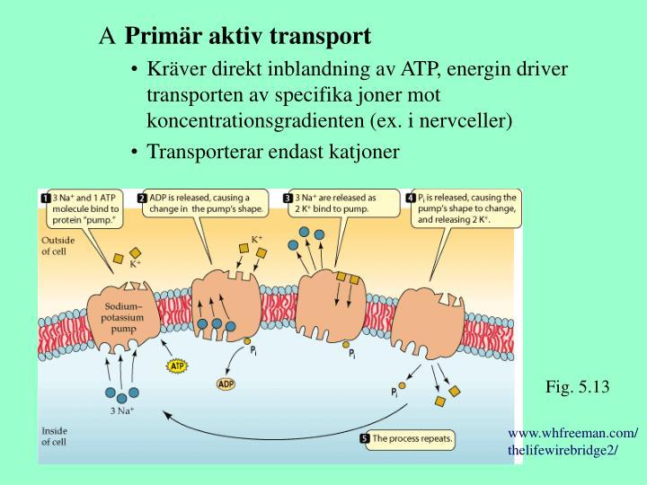 Primär aktiv transport