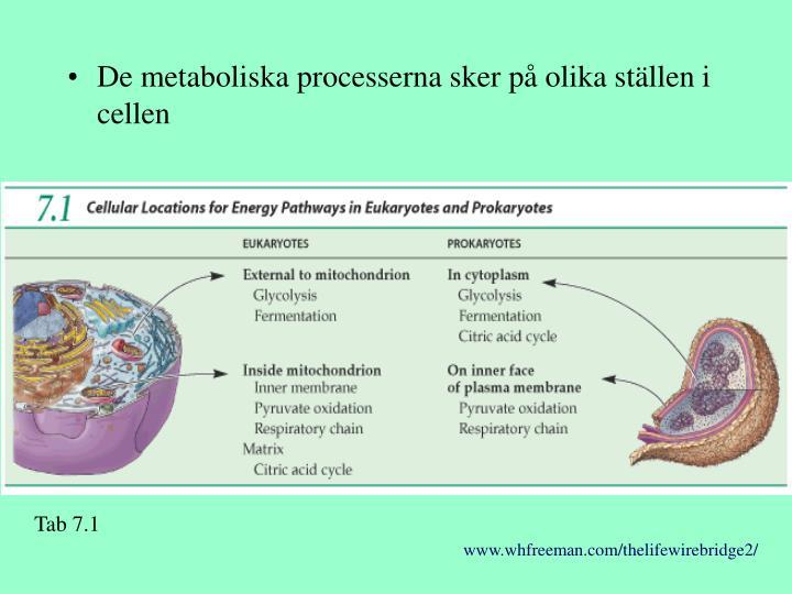 De metaboliska processerna sker på olika ställen i cellen